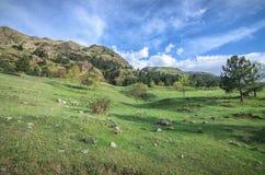 Le montagne di Caucaso verdi abbelliscono nella sera, sfondo naturale Immagini Stock