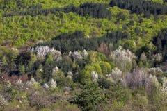 Le montagne di fioritura della molla della Bulgaria fotografie stock libere da diritti