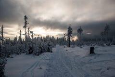 Le montagne di Jeseniky dell'inverno in repubblica Ceca con neve overed la traccia di escursione e gli alberi congelati Fotografie Stock Libere da Diritti