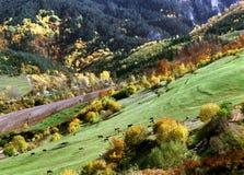 Le montagne di Rhodope - Bulgaria, Balcani, Europa immagine stock libera da diritti