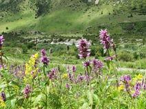 Le montagne piante Fiori immagini stock libere da diritti