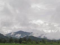 Le montagne, sotto la nebbia ed il riso Immagine Stock
