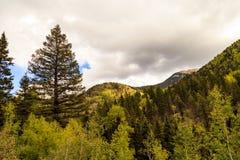 Le montagne variopinte di Colorado in autunno immagini stock