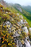 Le montagne verdi in nebbia Fotografia Stock Libera da Diritti