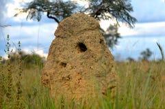 Le monticule de termite creusent par le fourmilier Photo libre de droits