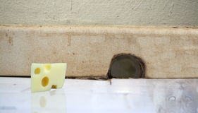 Le morceau de fromage et de chat a réfléchi sur le plancher devant un MOU photos stock
