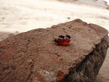 Le mosche Fotografia Stock