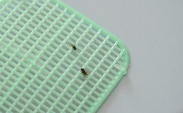 Le mosche hanno ottenuto le uccisioni dalla falda di plastica sulla pavimentazione in piastrelle Fotografia Stock