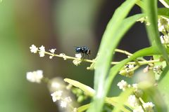 Le mosche sono verdi in fiori fotografie stock libere da diritti