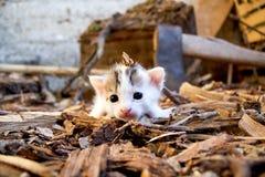 Le mouchard nouveau-né de chaton de petit animal de chat et explorent la terre en bois photo libre de droits