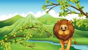 Le Mountain View avec un lion et une rivière Photos stock