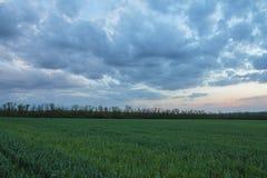 Le mouvement des nuages noirs au-dessus des champs du whea d'hiver Photos libres de droits