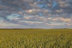 Le mouvement des nuages noirs au-dessus des champs du whea d'hiver Images libres de droits