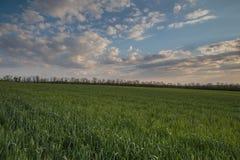 Le mouvement des nuages noirs au-dessus des champs du whea d'hiver Photo stock