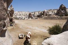 Le mucche & frana Cappadocia Fotografia Stock Libera da Diritti