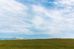 Le mucche pascono nell'azienda agricola verde del cielo blu del prato fotografie stock libere da diritti