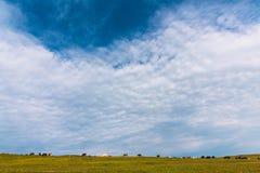 Le mucche pascono nell'azienda agricola verde del cielo blu del prato immagini stock libere da diritti