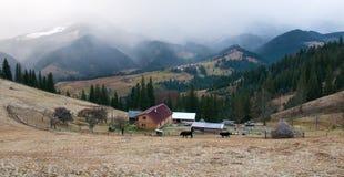 Le mucche pascono su un pascolo, in polvere con neve contro il contesto delle montagne Immagine Stock Libera da Diritti