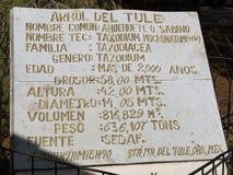 Le mucronatum de del Tule Taxodium de rbol de  de à est un cyprès dans la ville mexicaine du sud de Santa Maria del Tule Oaxaca images libres de droits