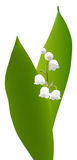 Le muguet Photos stock