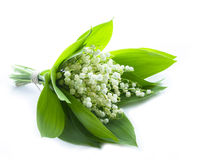 Le muguet d'isolement Photo libre de droits
