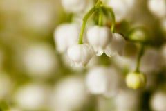 Le muguet de fleur Photographie stock libre de droits