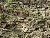 Le mur avec l'herbe de la forteresse dans la ville de Dubno Un jour d'été Image stock