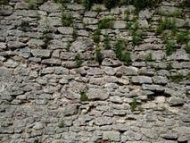Le mur avec l'herbe de la forteresse dans la ville de Dubno Un jour d'été Photographie stock libre de droits