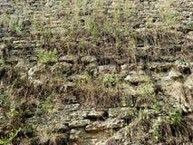 Le mur avec l'herbe de la forteresse dans la ville de Dubno Un jour d'été Pour le fond Images stock