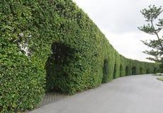 Le mur 003 d'arbre Photos libres de droits