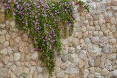 Le mur de floraison Photo libre de droits