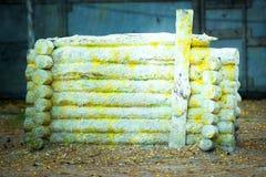 Le mur de grands rondins est jaune Dans les taches de la peinture Images libres de droits