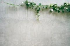 Le mur de mortier Il y a les arbres sciés autour des murs et du bâtiment Jardinage asiatique de style Images stock