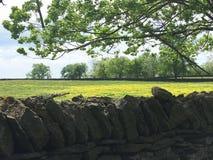 Le mur de roche comporte les Wildflowers jaunes Photographie stock