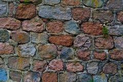 Le mur de sous-sol de fond du gris taillé a ébréché de grands échantillons d'herbe de stoneswith photos stock