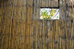 Le mur en bambou Images stock