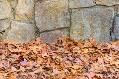 Le mur en pierre et sèchent des feuilles Photos stock