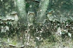 Le mur malpropre ont le fond de texture d'algues Photo stock