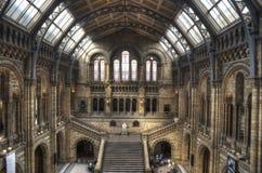Le musée d'histoire naturelle de Londres Photo libre de droits