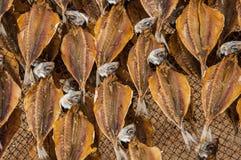 Le musée des poissons secs, dehors, sur la plage de Nazaré au Portugal, garde la tradition de sécher les poissons pour les jours image libre de droits