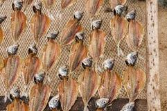 Le musée des poissons secs, dehors, sur la plage de Nazaré au Portugal, garde la tradition de sécher les poissons pour les jours images stock