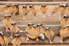 Le musée des poissons secs, dehors, sur la plage de Nazaré au Portugal, garde la tradition de sécher les poissons pour les jours photographie stock