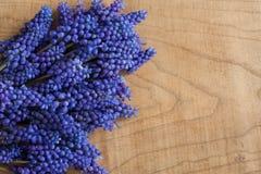 Le muscari bleu fleurit sur un fond en bois avec l'espace de copie Images libres de droits