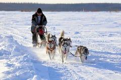 Le musher actionne une luge tirée par des chiens Photographie stock libre de droits