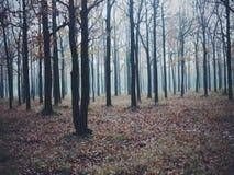 le mystère de l'automne Images libres de droits