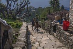 Le Népal, Himalaya, Ghandruk photos libres de droits
