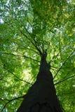 leśna wiosna obraz royalty free