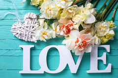 Le narcisse frais de ressort fleurit, amour de mot et coeur décoratif Photo libre de droits