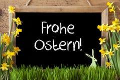 Le narcisse, lapin, Frohe Ostern signifie Joyeuses Pâques photo libre de droits