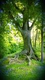 Le nature si dirigono Fotografia Stock